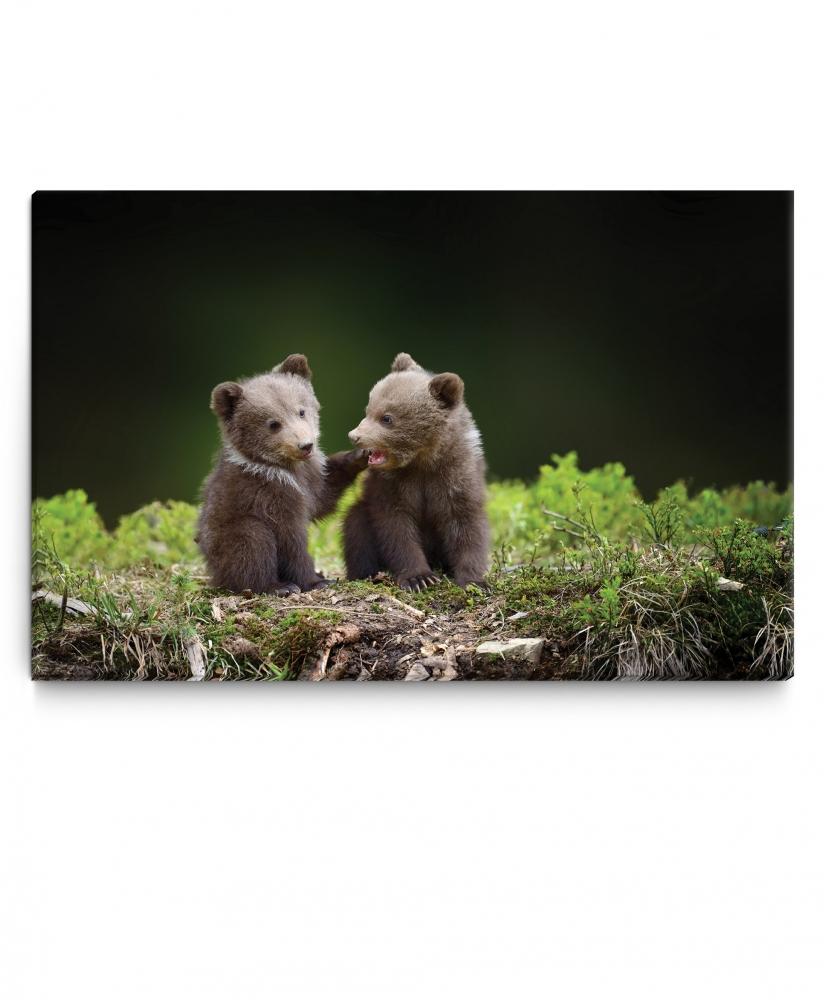 Dětský obraz Medvíďata v lese, 60x40 cm