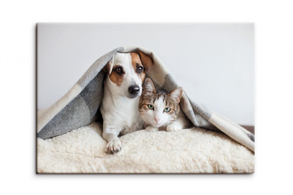 Dětský obraz pes a kočka, 90x60 cm