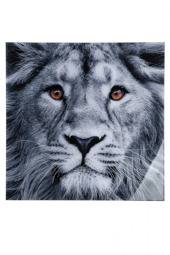 Nástěnný obraz Lion, bílá / černá
