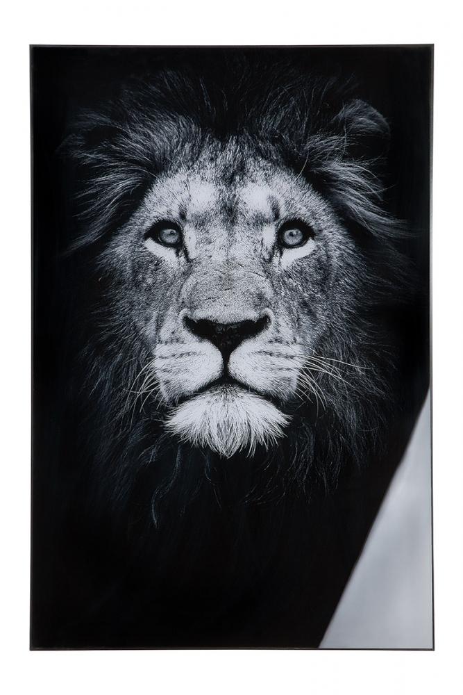 Nástěnný obraz Lion II, bílá / černá