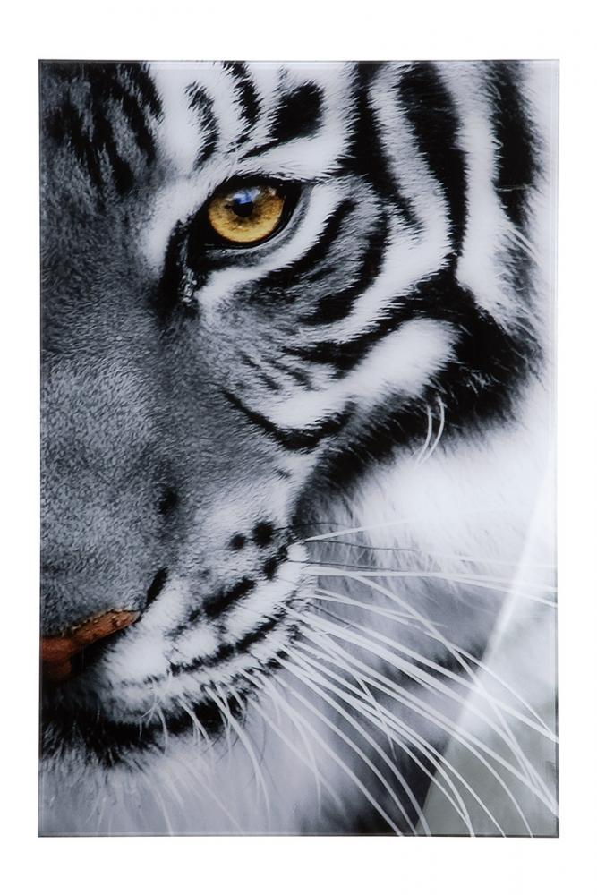 Nástěnný obraz Tiger, bílá / černá