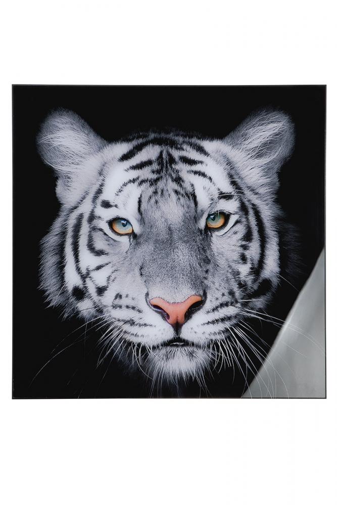 Nástěnný obraz Tiger II, bílá / černá