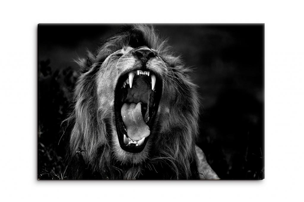 Obraz Černobílý královský lev, 150x100 cm