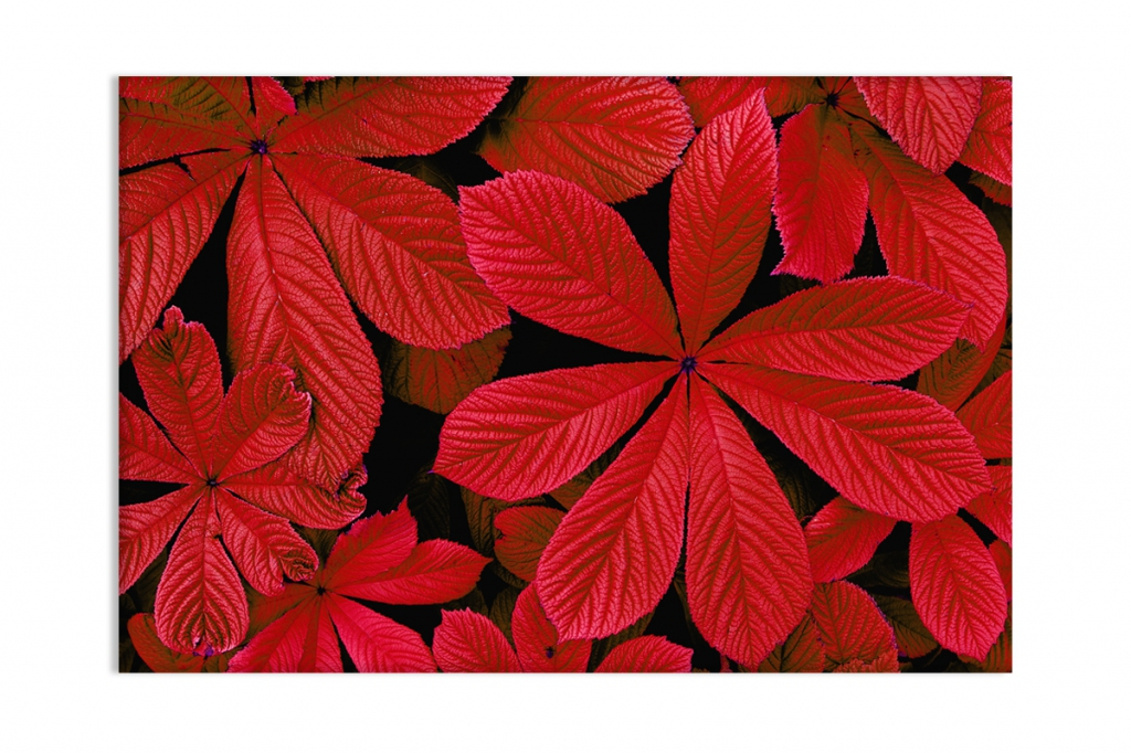 Obraz Červené listí, 90x60 cm