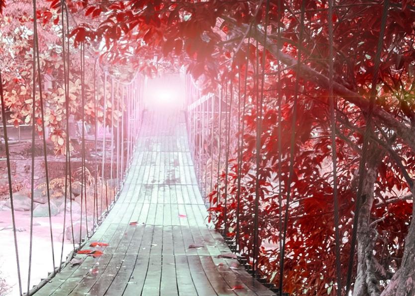 Obraz Červený ráj, 90x60 cm