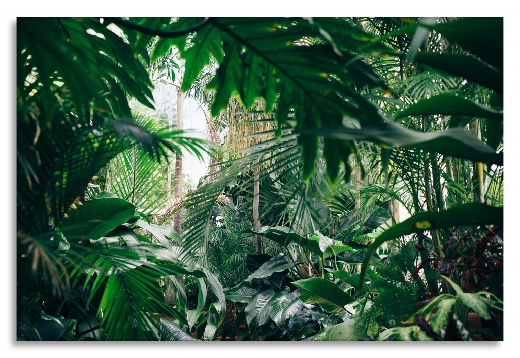 Obraz Domácí džungle, 90x60 cm