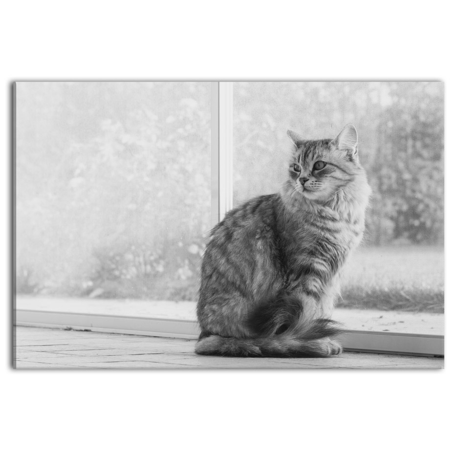 Obraz Kočka, 120x80 cm