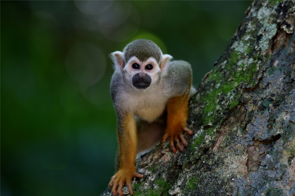 Obraz Opička na stromě, 120x80 cm