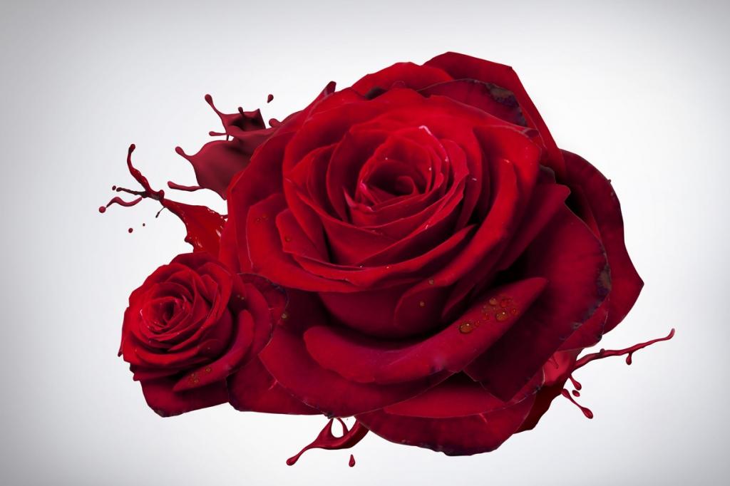 Obraz Růže, 150x100 cm