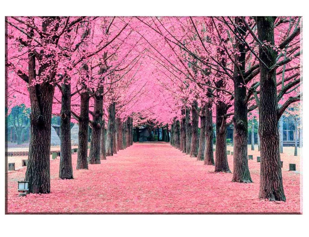 Obraz Růžová alej, 120x80 cm