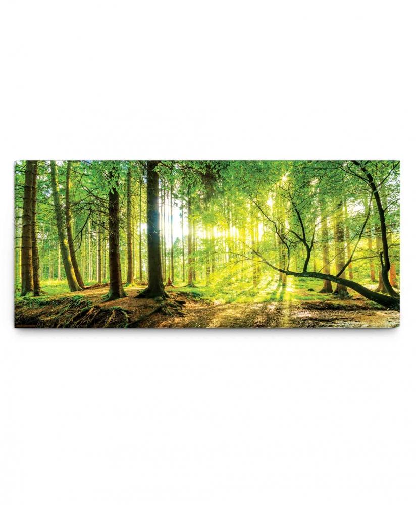 Obraz Slunce v lese, 70x30 cm