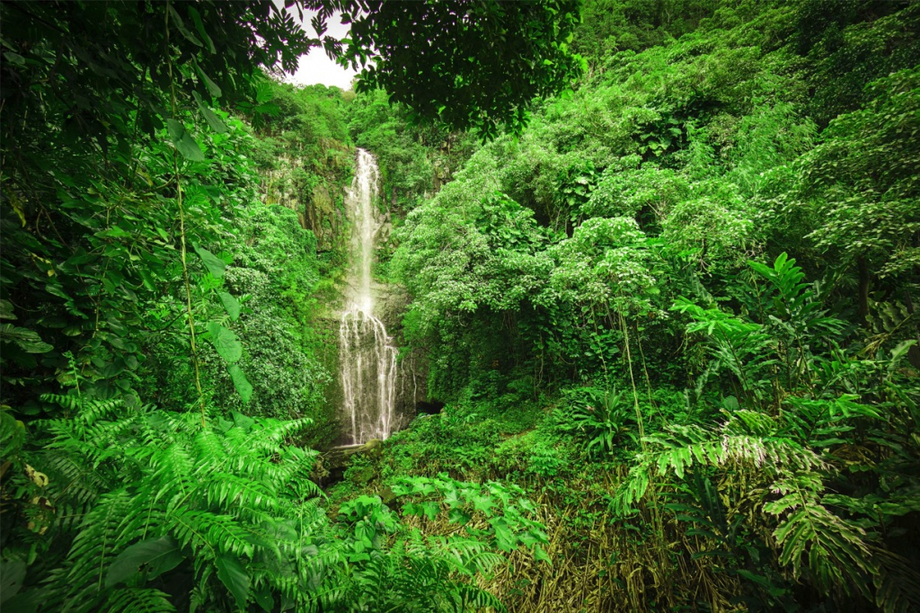 Obraz Vodopád v lese, 90x60 cm