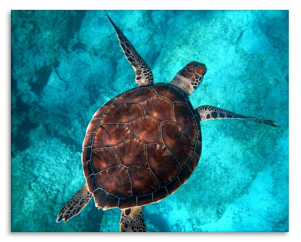 Obraz Želva v moři, 90x60 cm